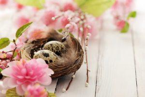 eggs flowers easter