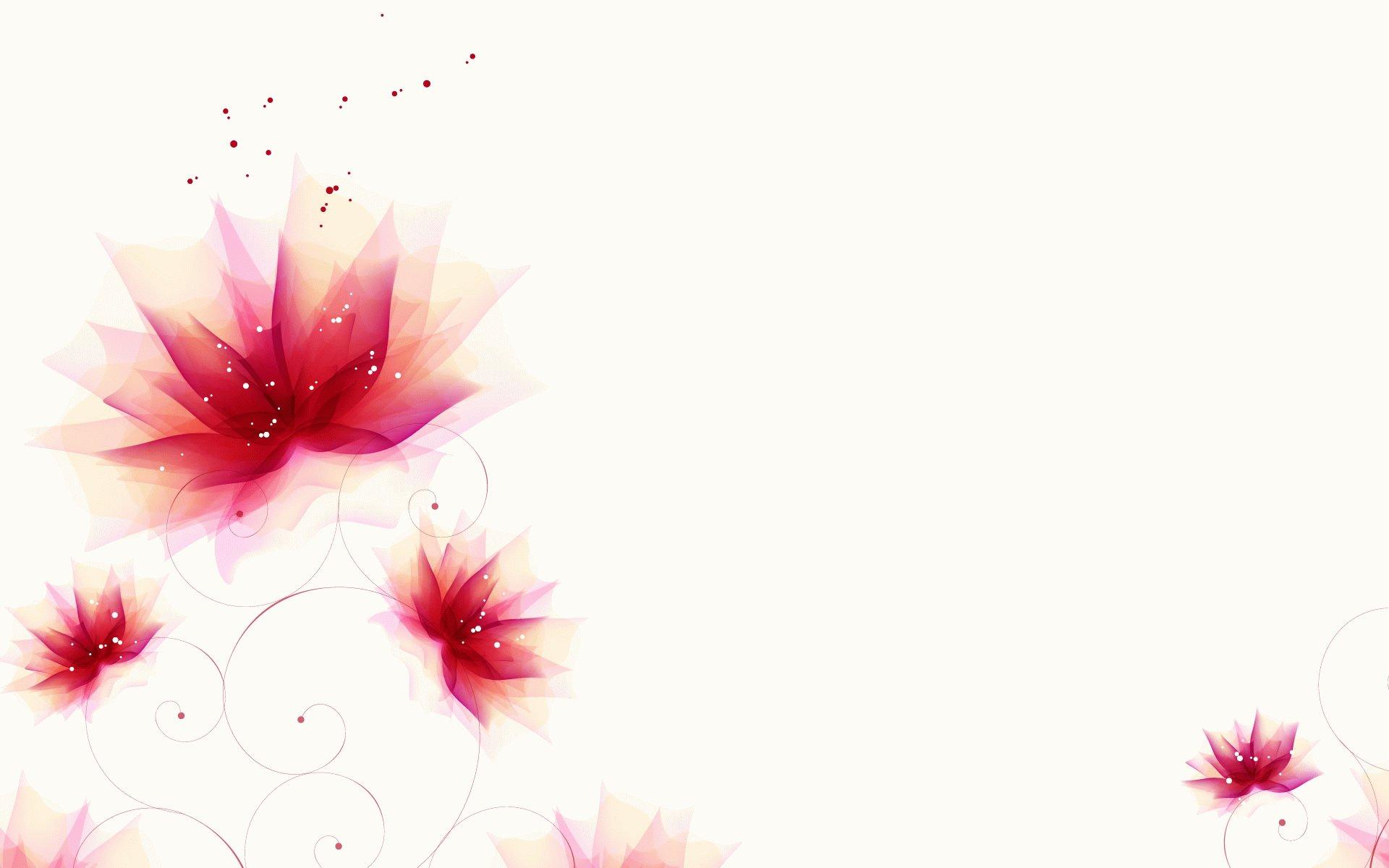 elegant flower pictures