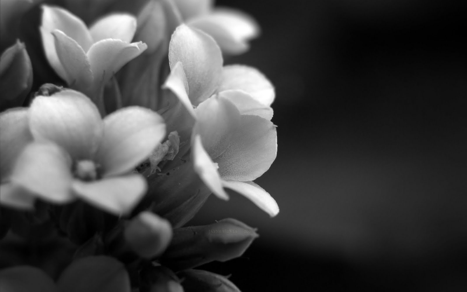 elegant flowers A2