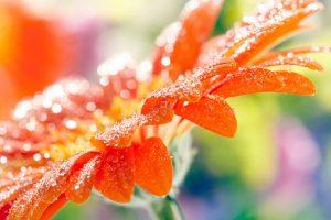 fantastic flowers orange