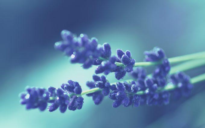 fantastic flowers purple
