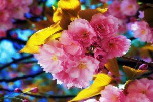 fantastic flowers spring