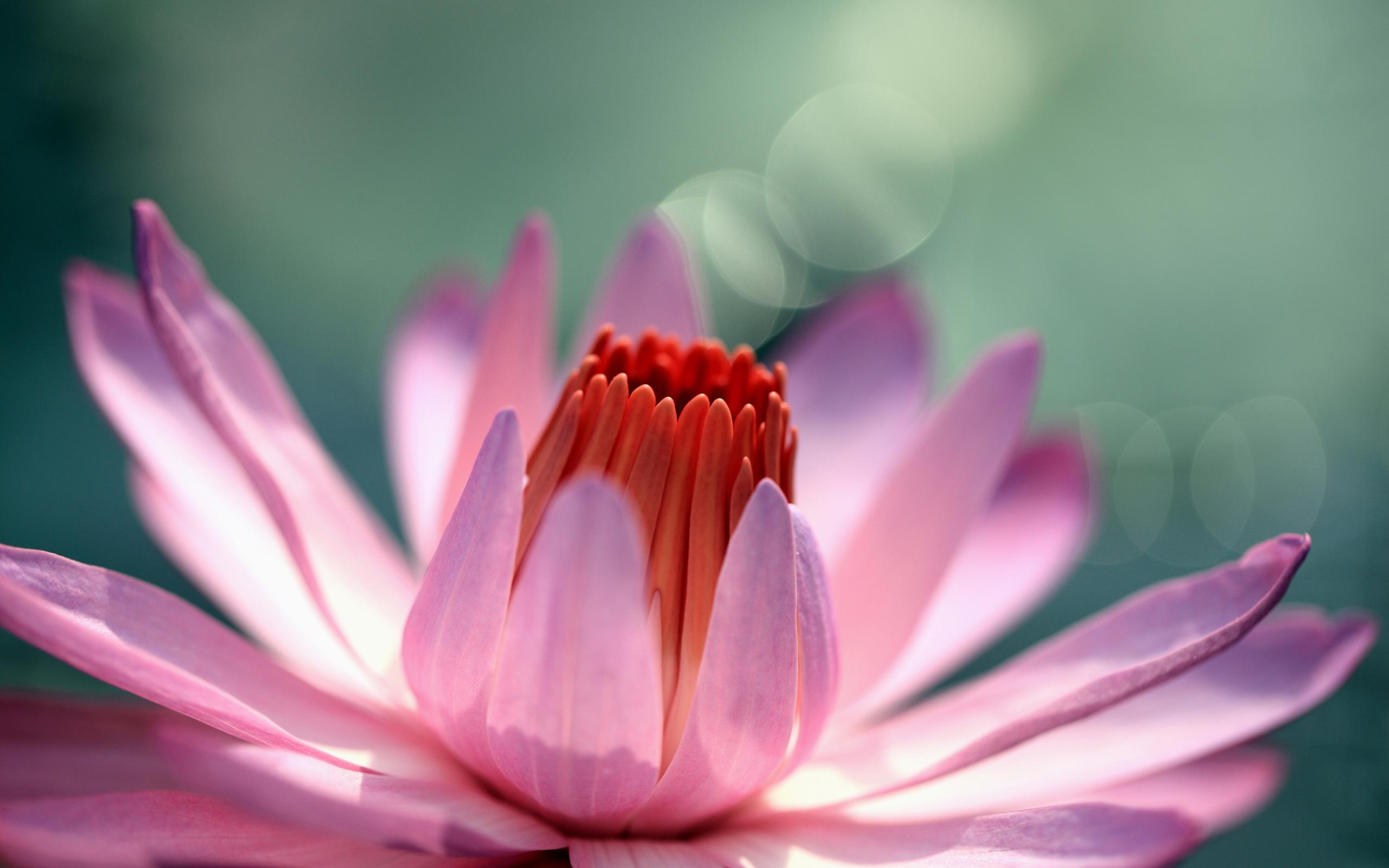 fantastic flowers water