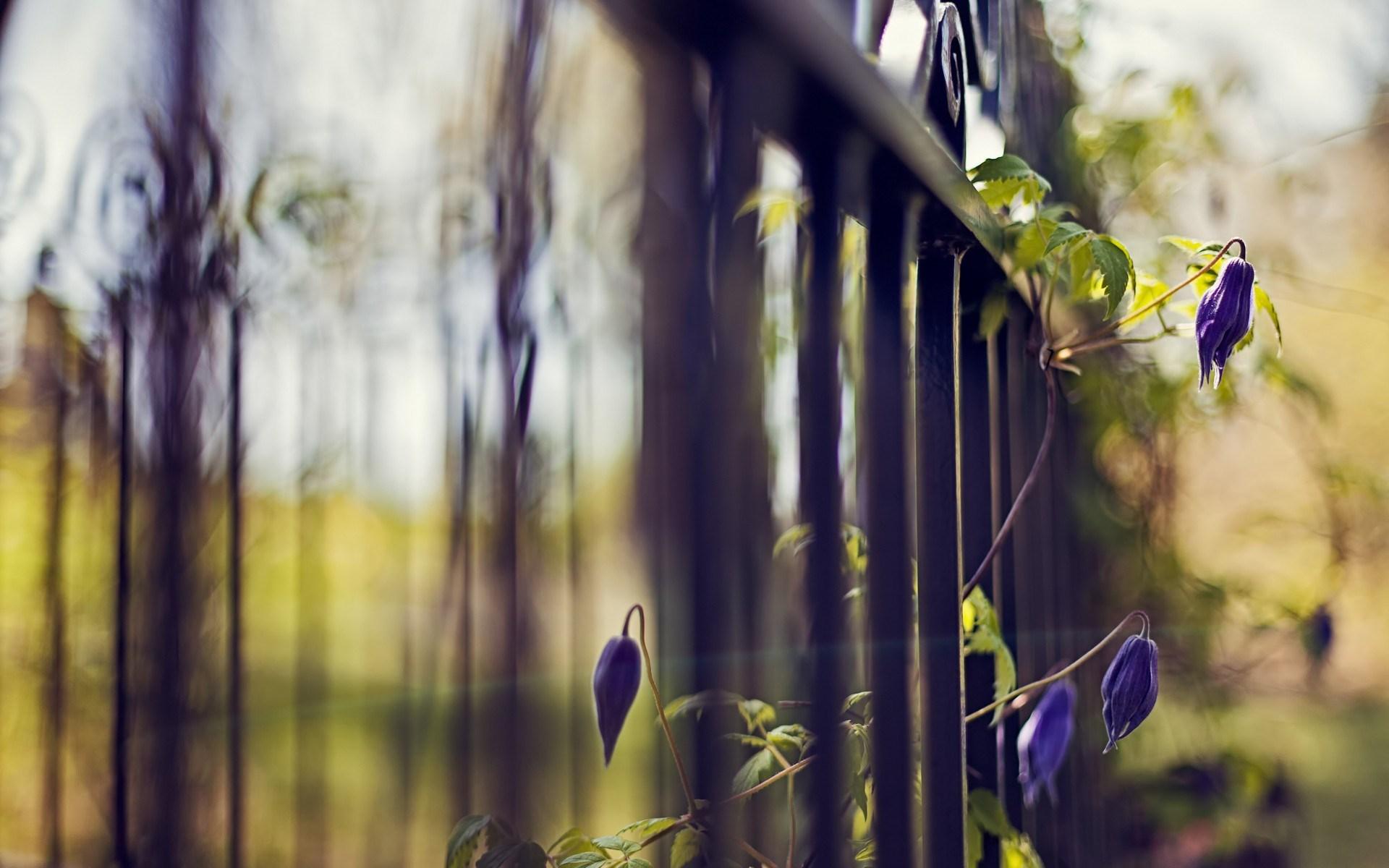 fence flowers focus bokeh