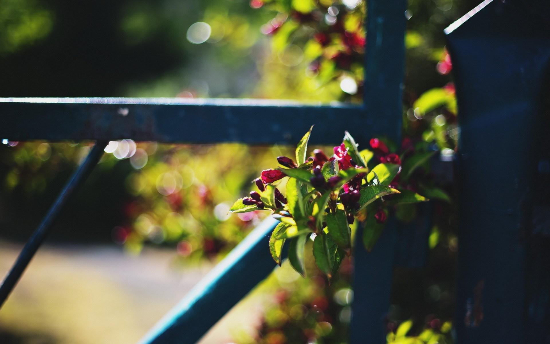 fence flowers macro