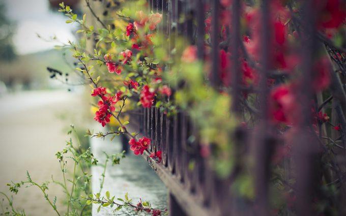 fence flowers street