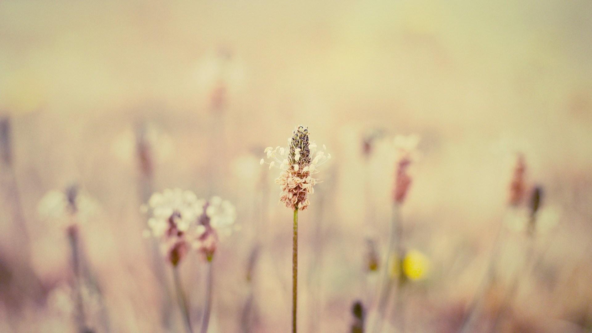 field nature flowers