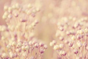 floral wallpaper A2
