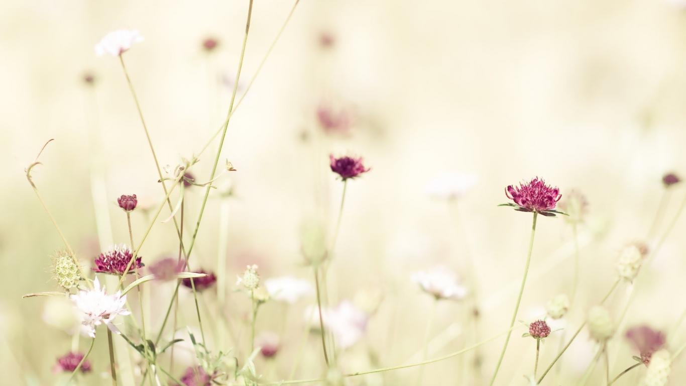 flower background tumblr