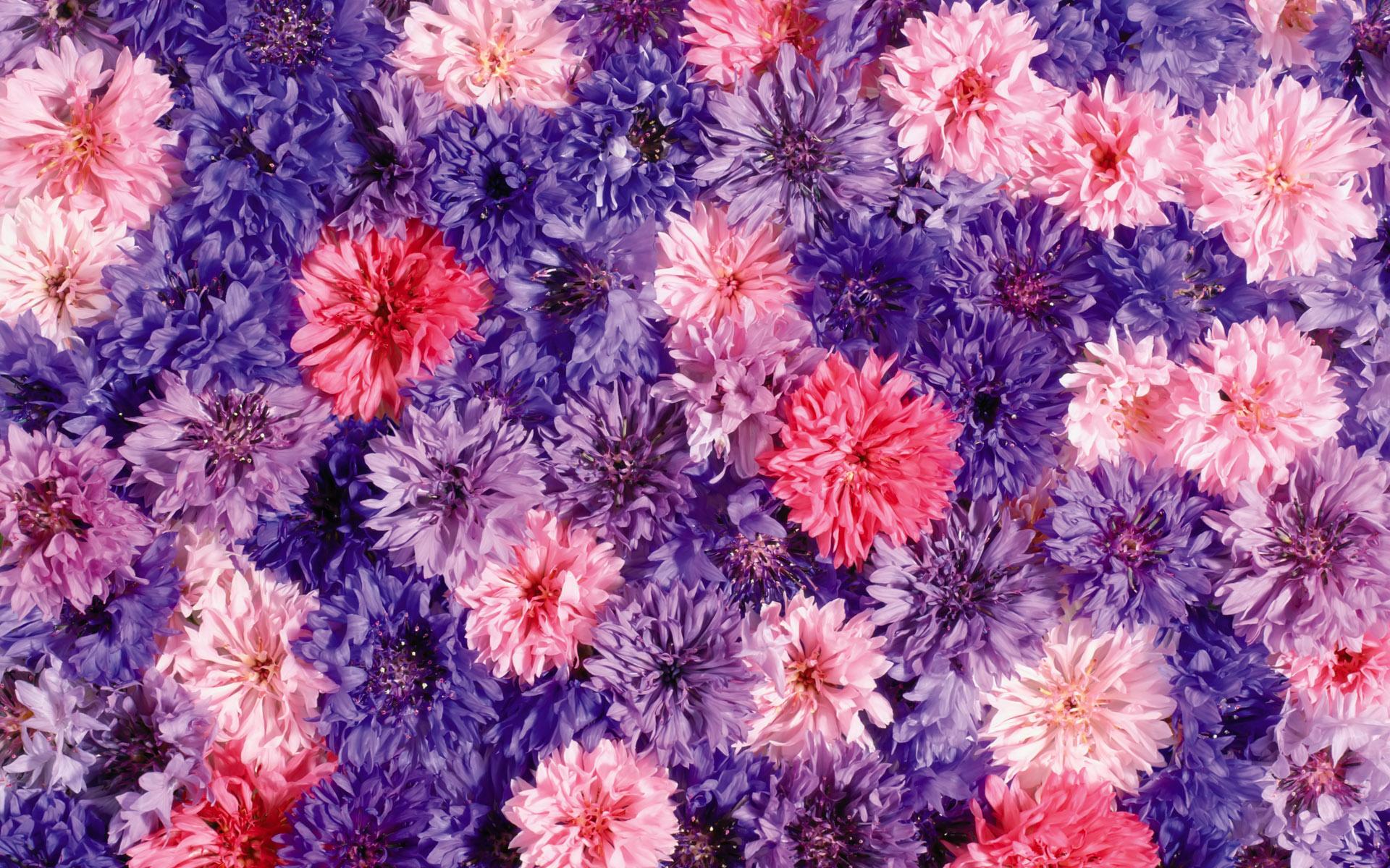 flower backgrounds pink cute hd desktop wallpapers 4k hd