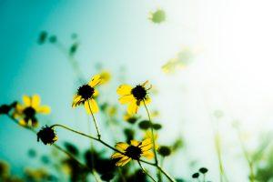 flower backgrounds wild