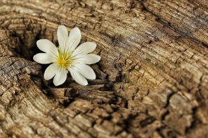 flower bark wood tree