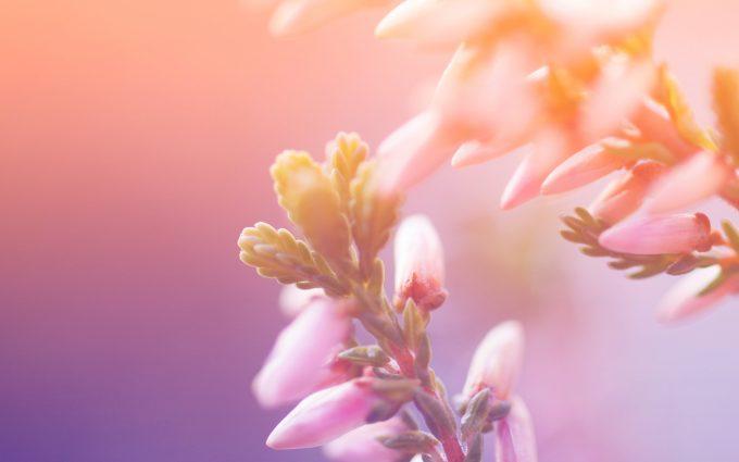 flower blossom A4