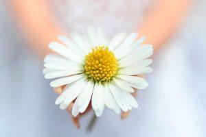 flower close up macro