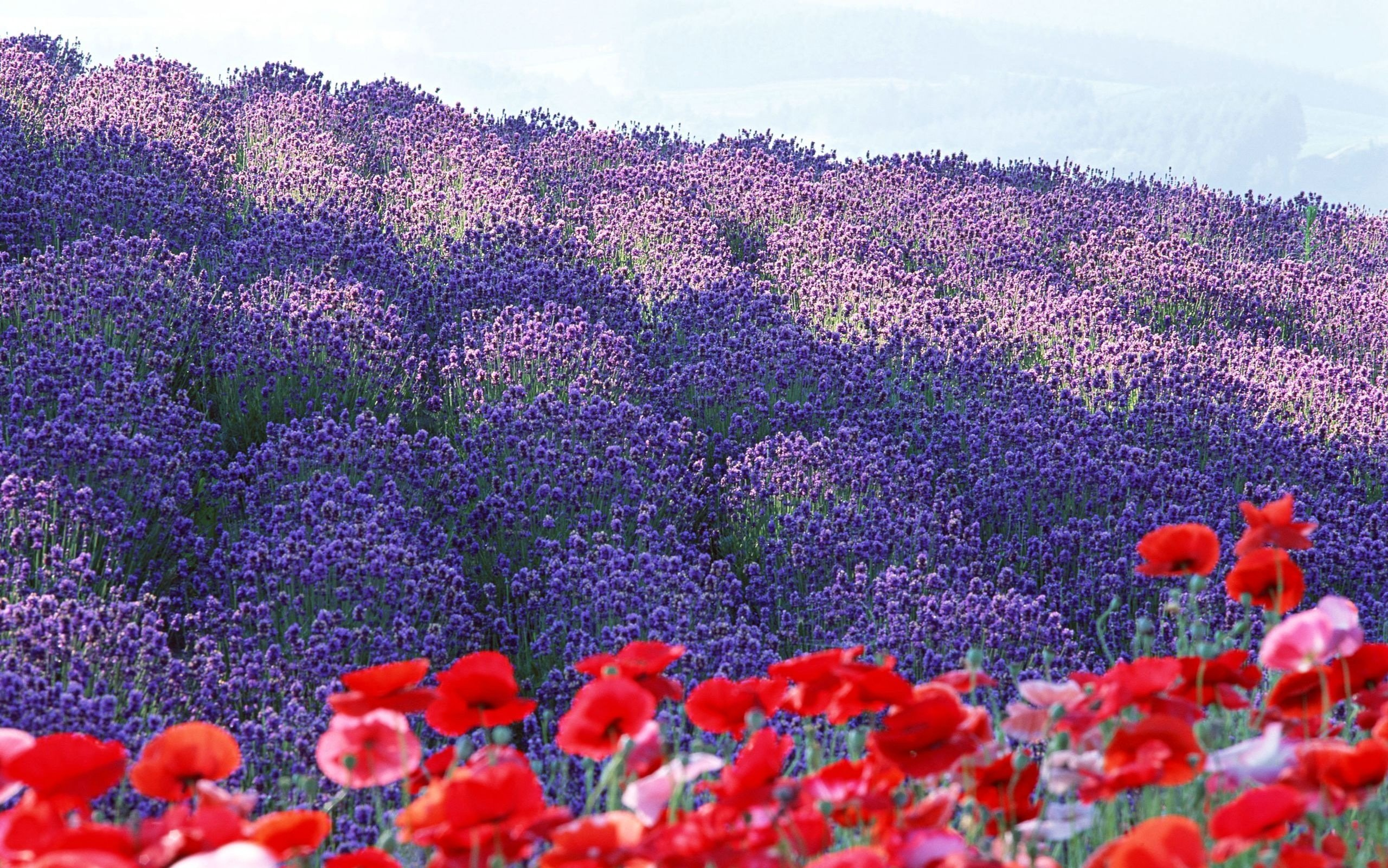 flower field landscape