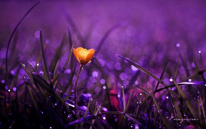 flower grass dew nature