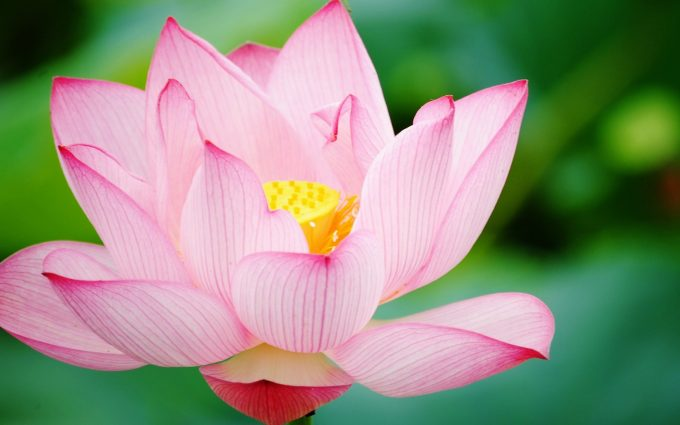 flower images hd