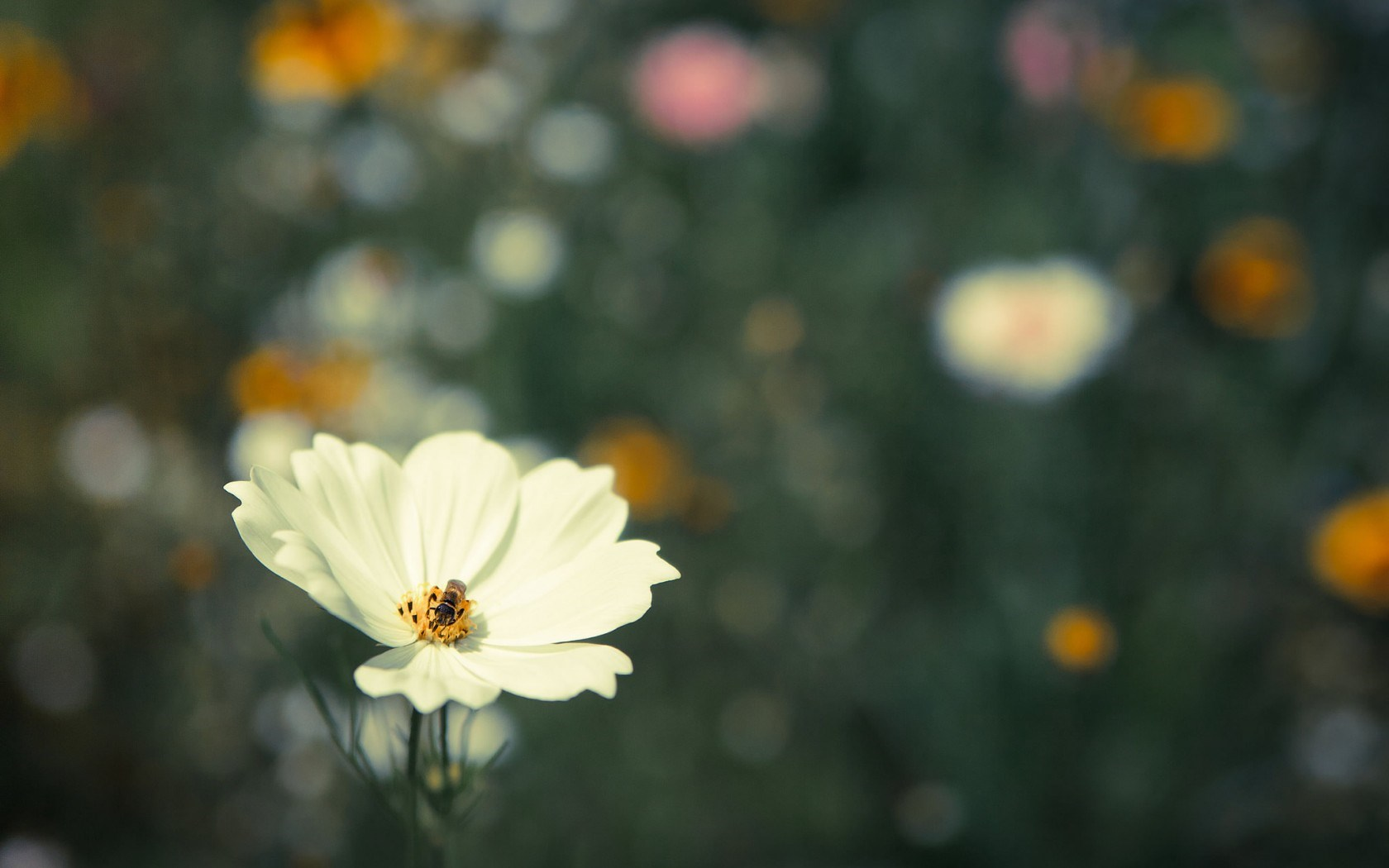 flower insect bee pic