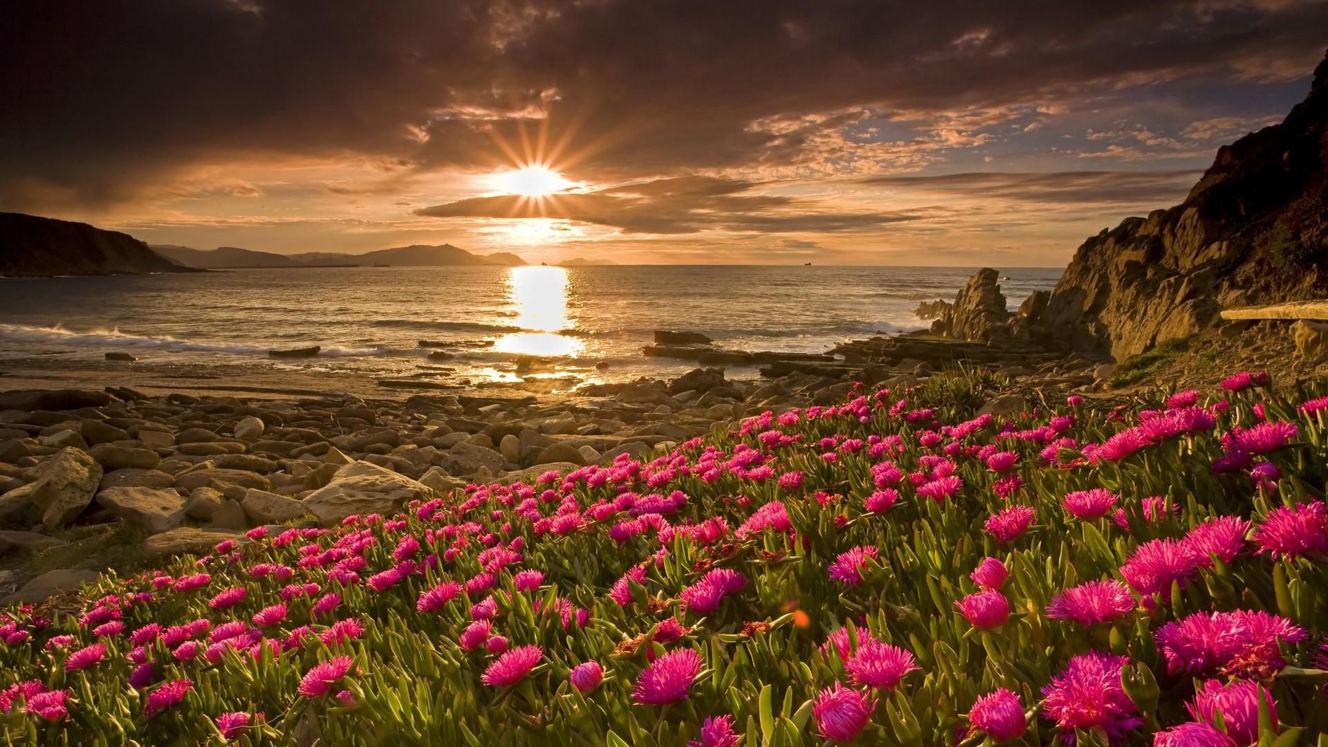 flower landscape hd nature aa