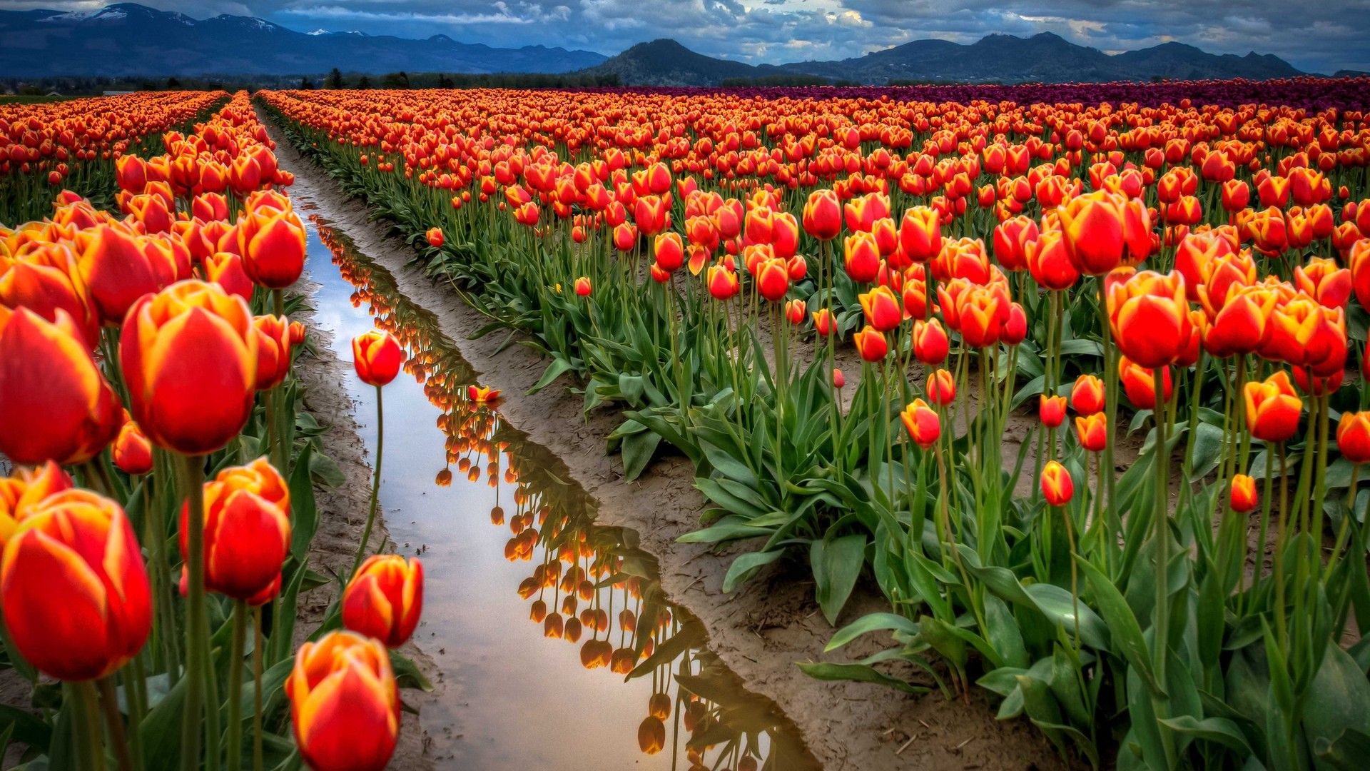 flower landscape wallpaper cool