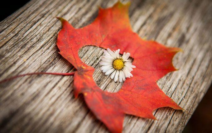 flower leaf heart love mood
