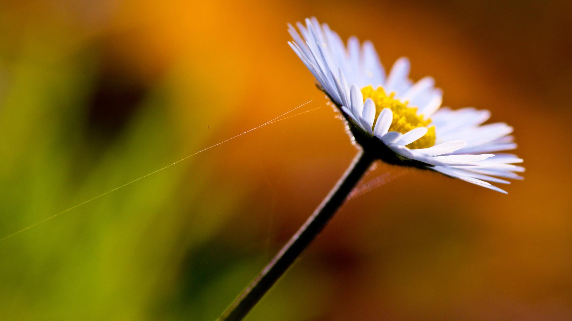 flower macro cool