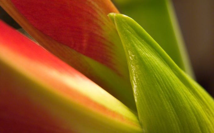flower petal download free