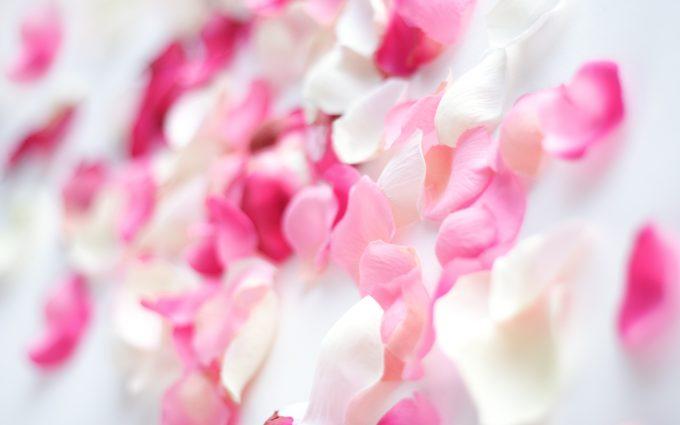 flower petal images