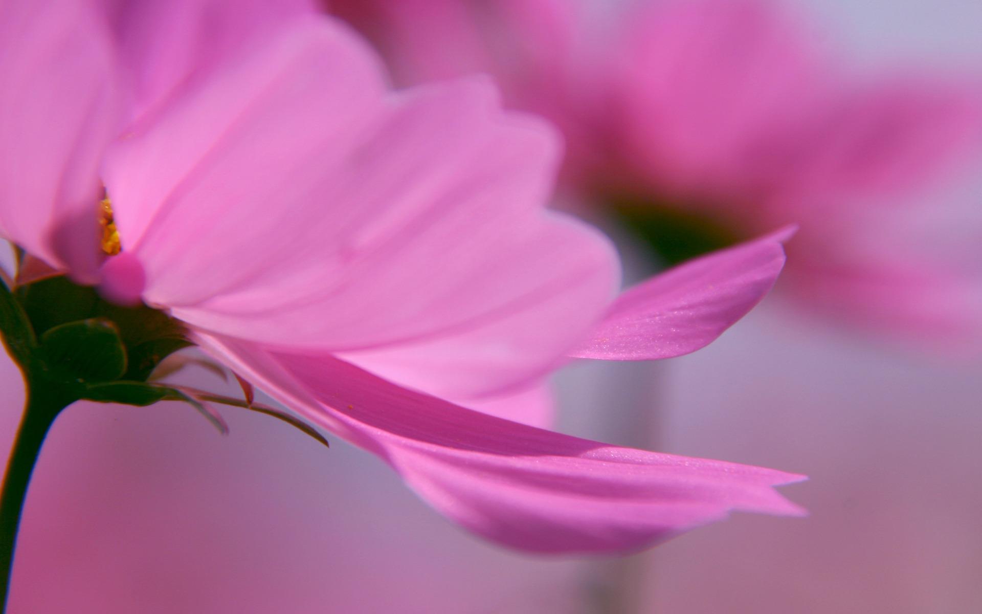 flower petal pictures