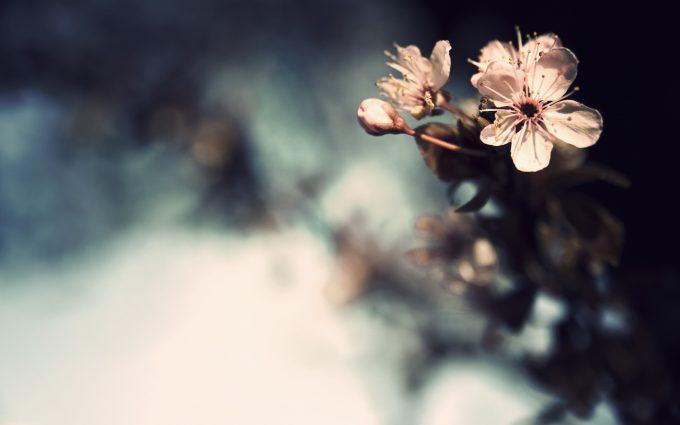 flower petal wallpaper