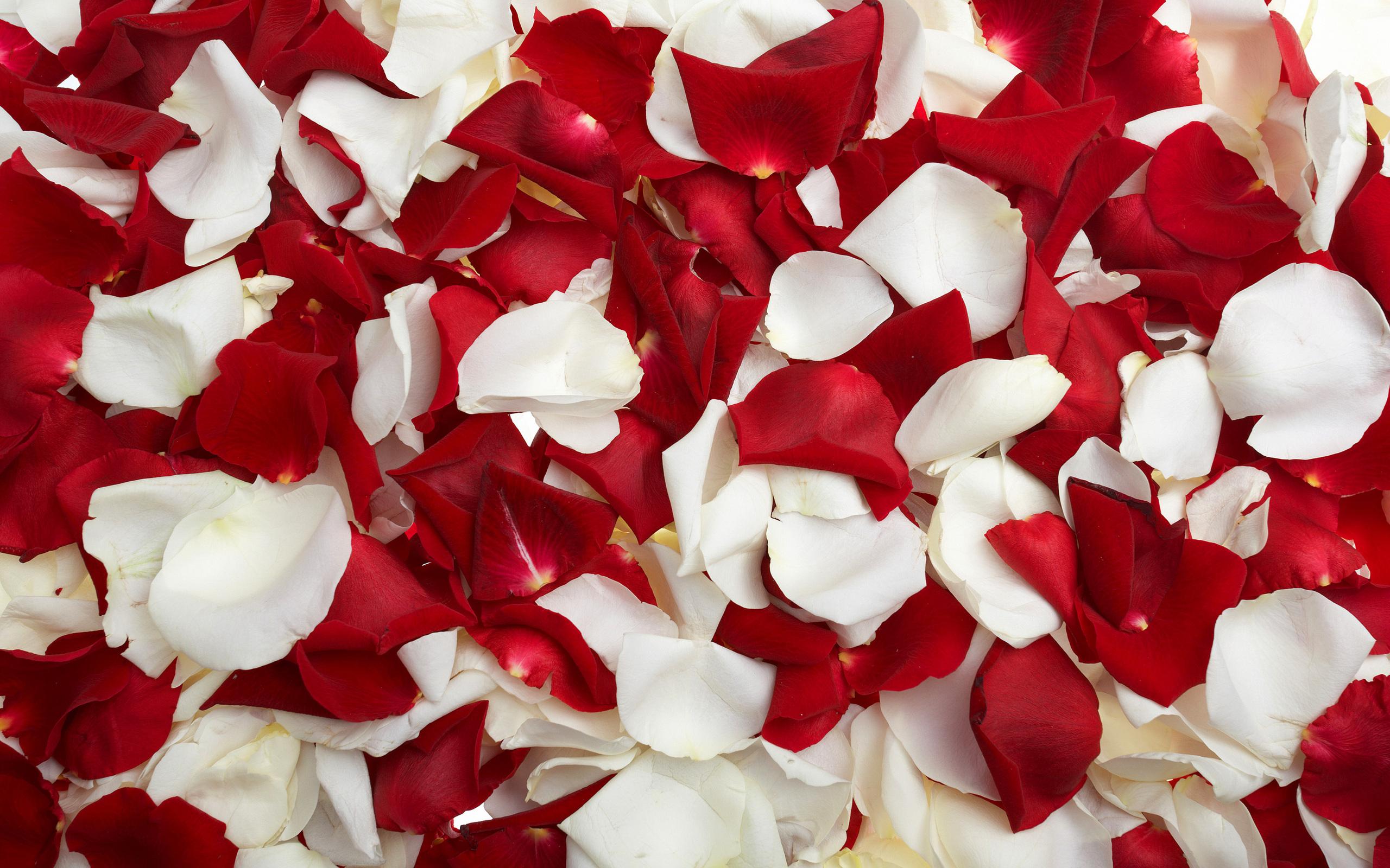flower petal wallpapers