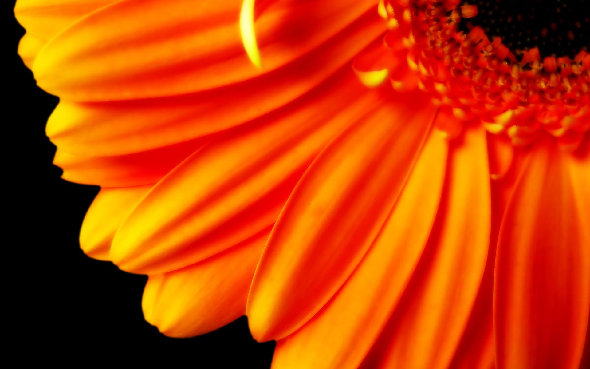 flower petals cool