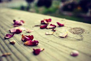 flower petals download