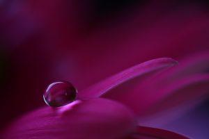 flower petals drop macro