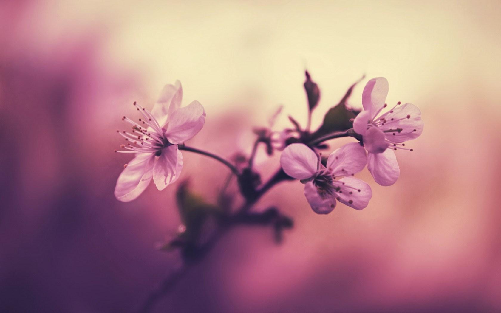 flower petals free