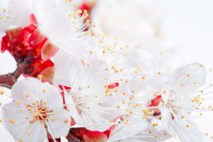 flower petals hd
