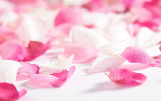 flower petals images
