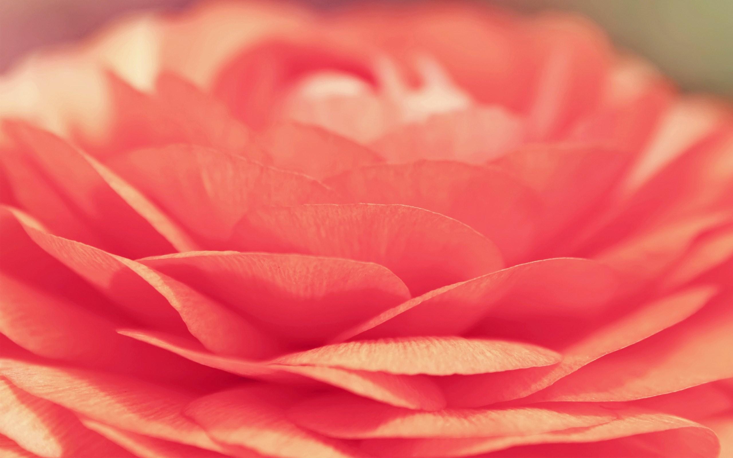 flower petals orange