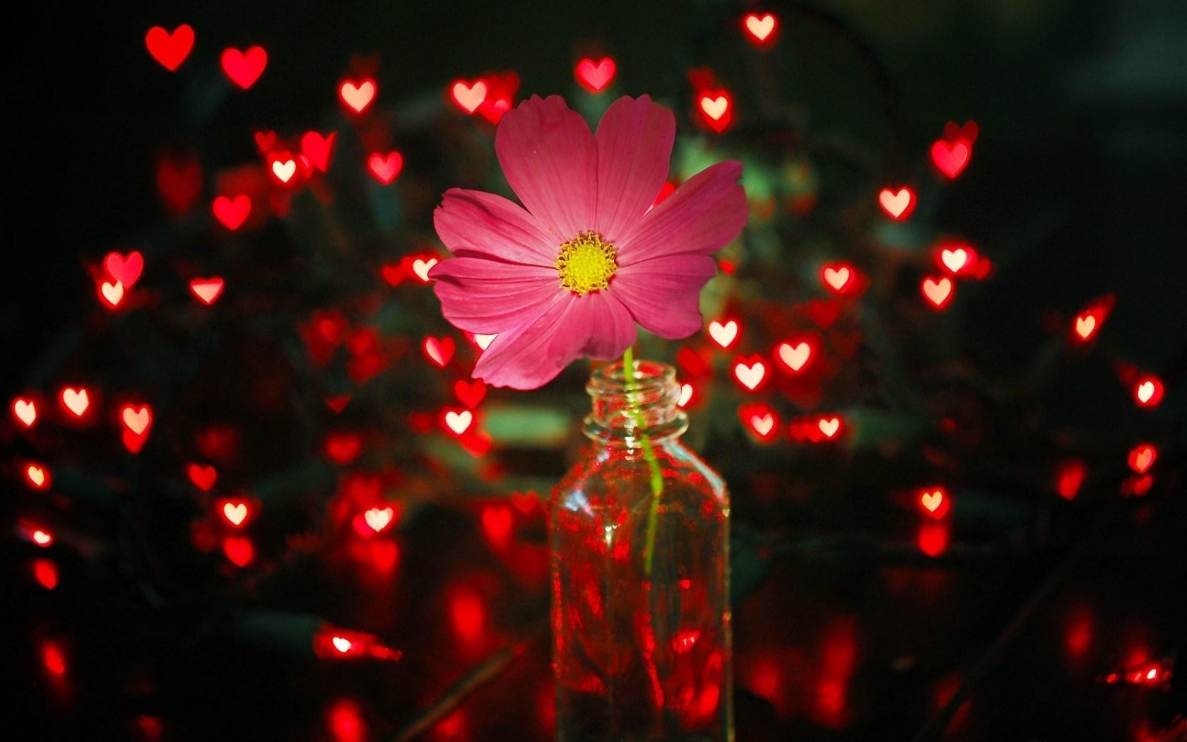 flower pink jar lights red hearts - HD Desktop Wallpapers ...