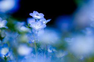 flower stunning A2