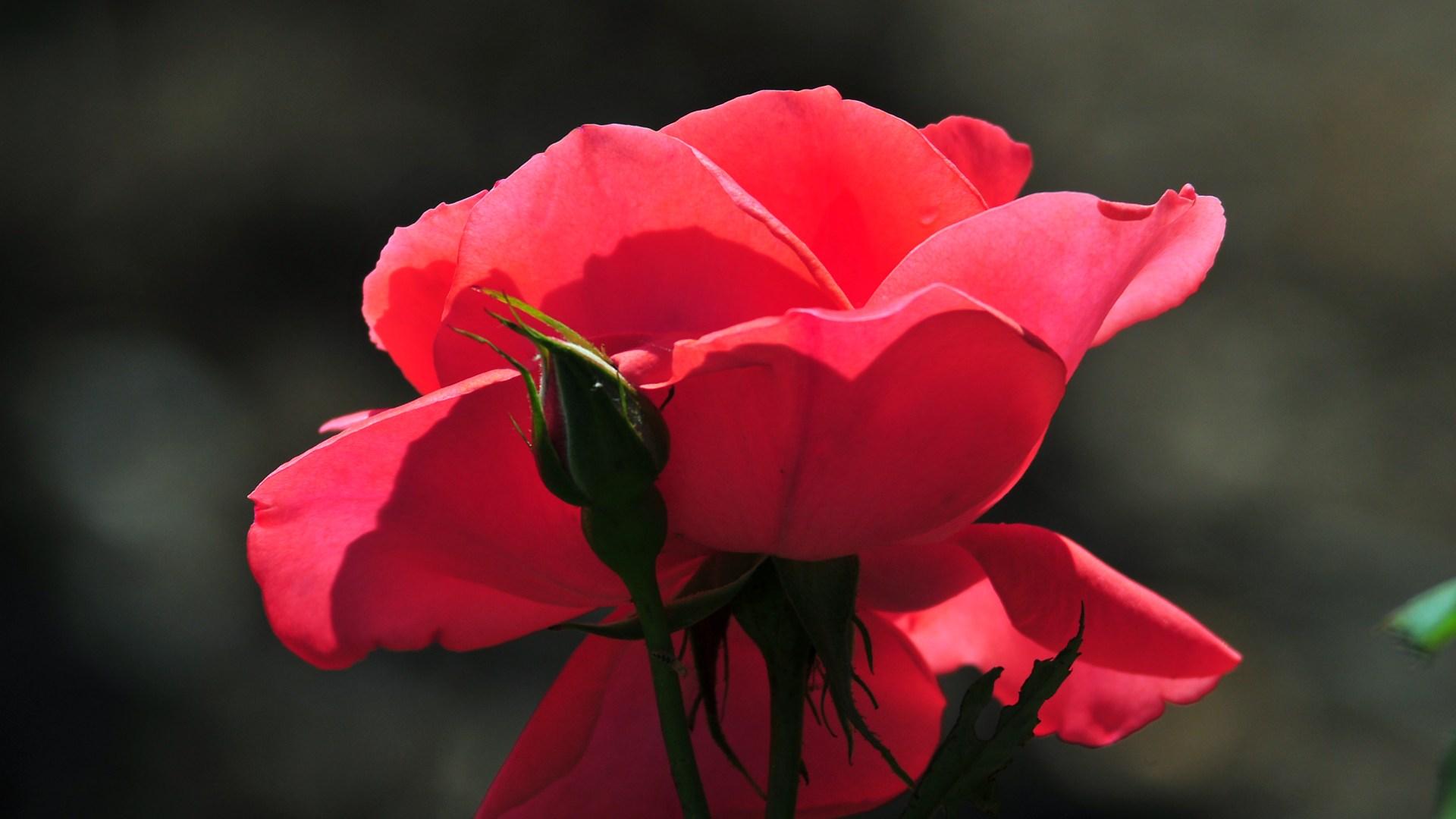 flower stunning A5