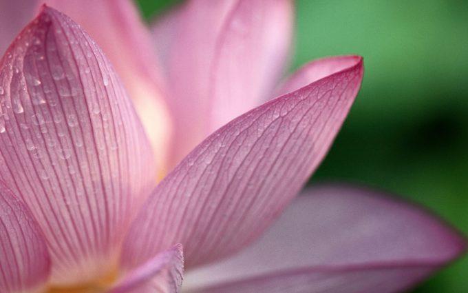 flower stunning A6
