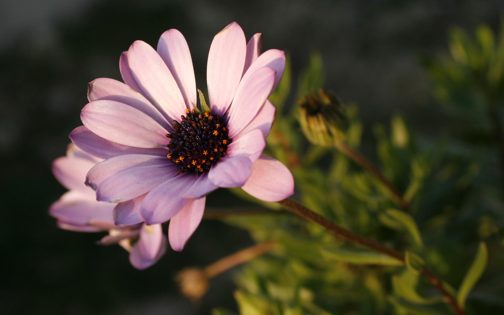 flower stunning A8