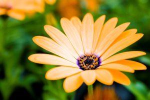flower stunning A9