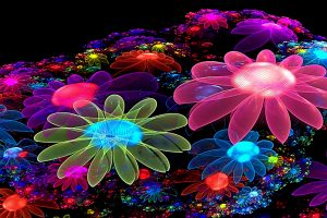 flower stunning wallpaper