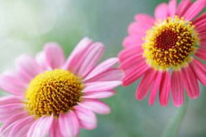 flower wallpaper A