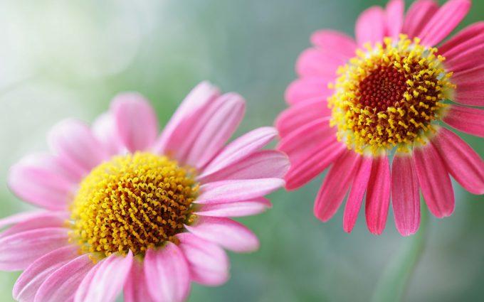flower wallpaper A