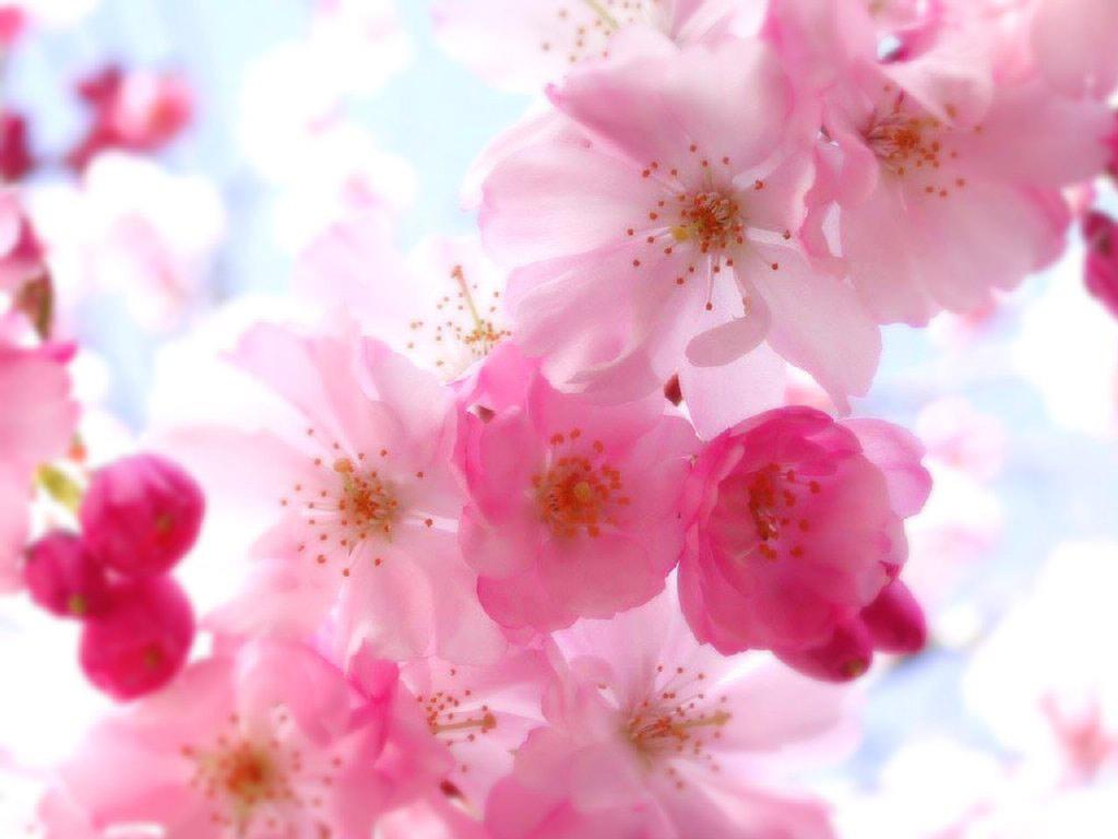fleurd