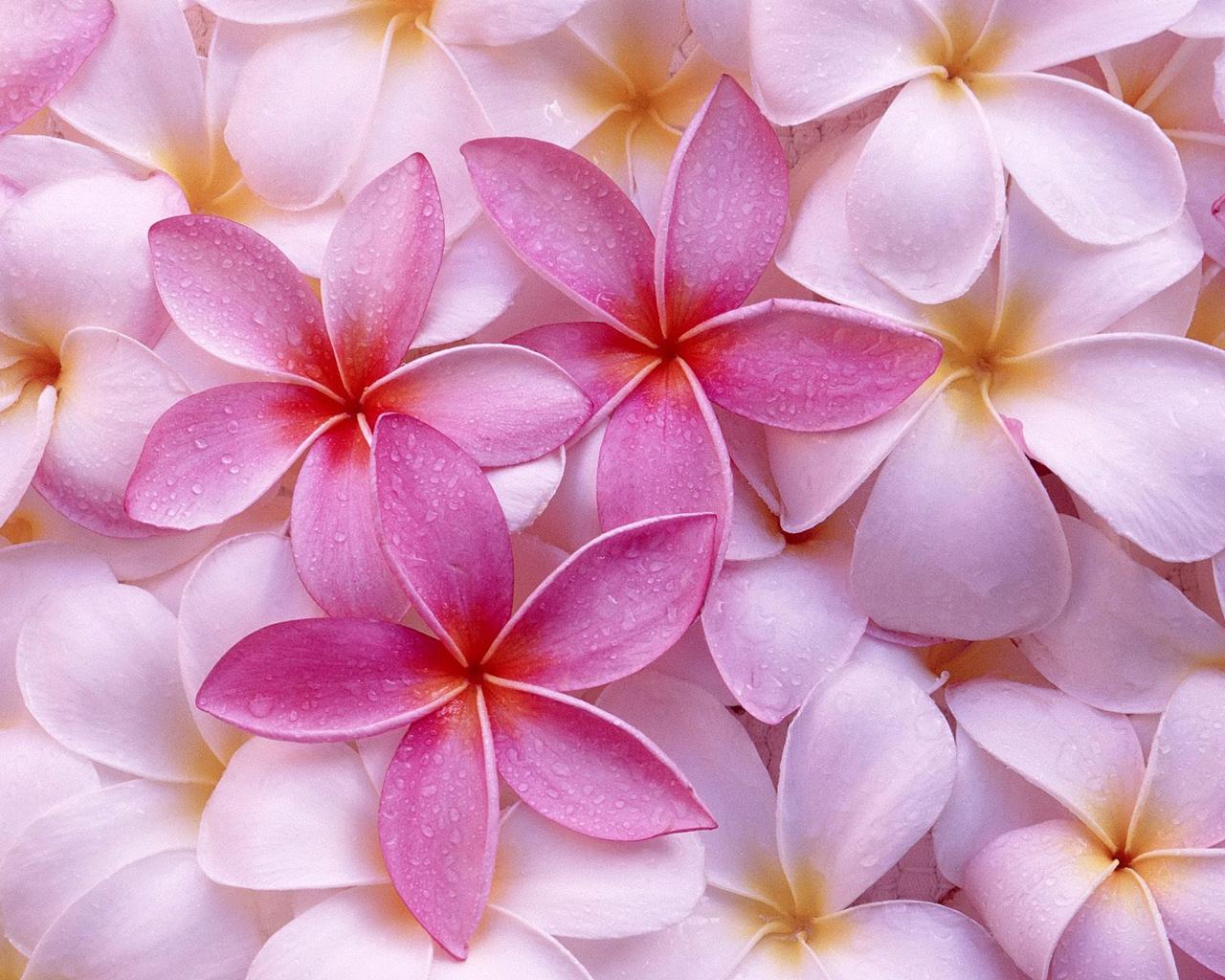flower wallpaper A10
