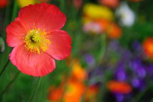 flower wallpaper A15